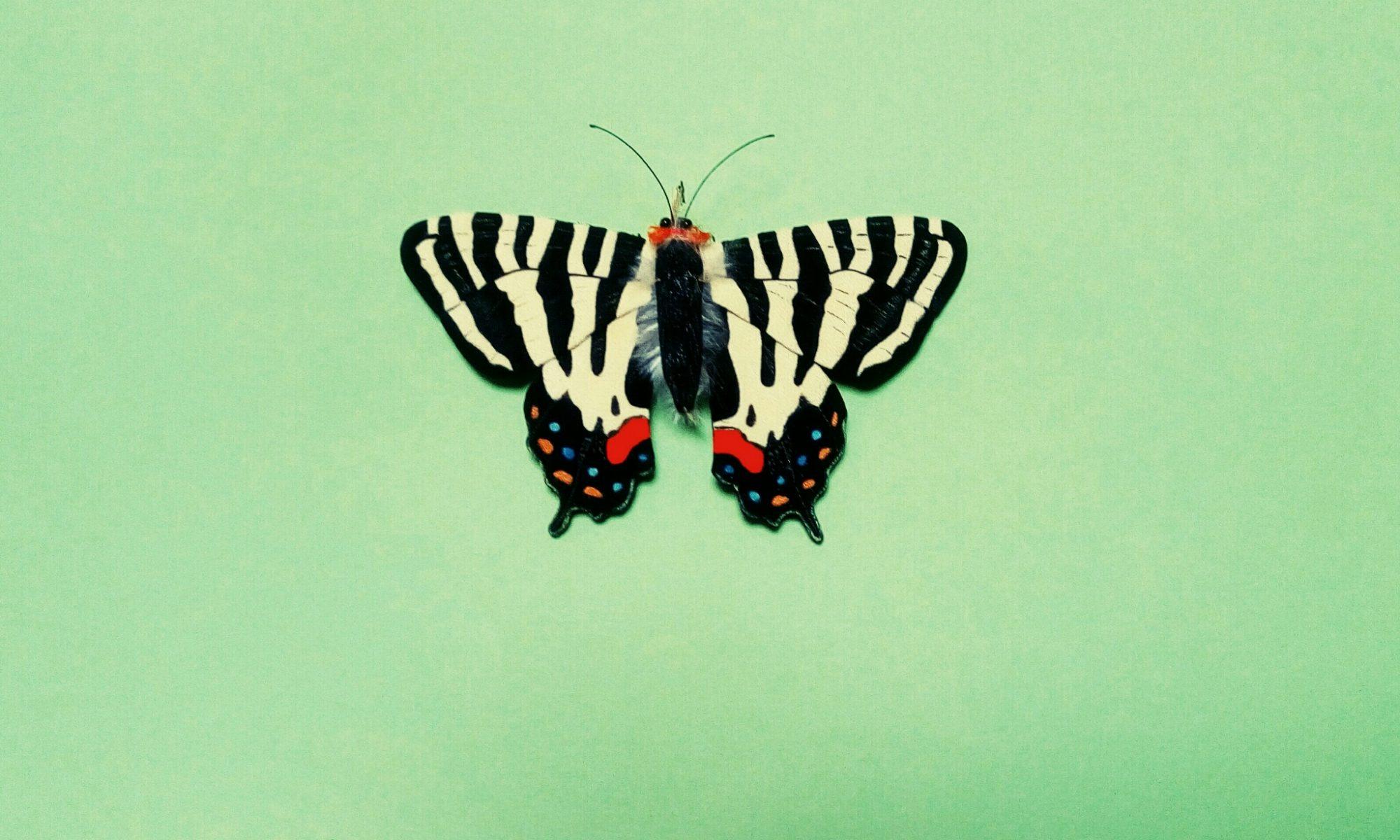 うつくしい昆虫布図鑑